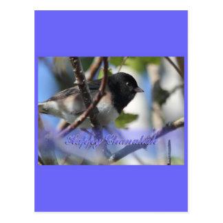 happy hanukkah happy chanukah bird junco post card