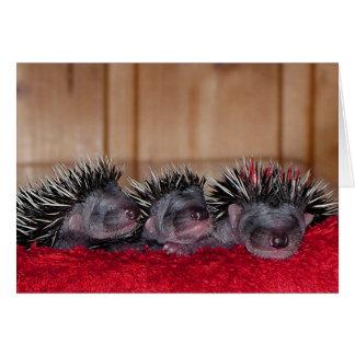 Happy Hedgehog Day! Card