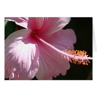 Happy Hibiscus Card