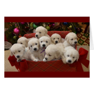 Happy Holiday Golden Retriever puppies Card