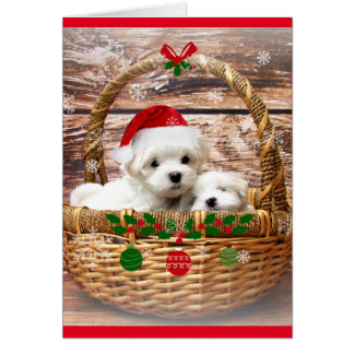 Happy Holidays: Maltese Puppies Card