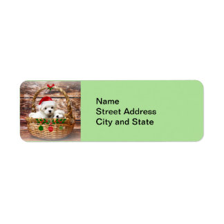 Happy Holidays: Maltese Puppies Return Address Label
