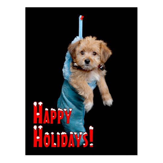 Happy Holidays Puppy Postcard