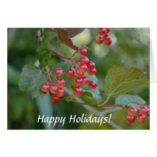 Happy Holidays : Red Berries Greeting Card