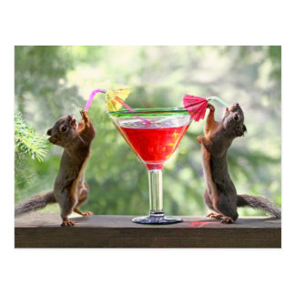 Happy Hour Squirrels Postcard