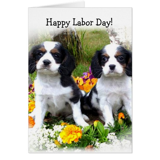 Happy Labour day King Charles Spaniel puppies card