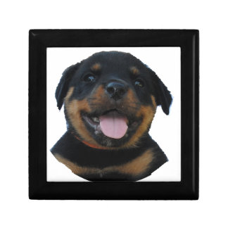 Happy Male Rottweiler Puppy Gift Box