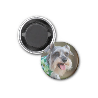 Happy Miniature Schnauzer Puppy Magnet