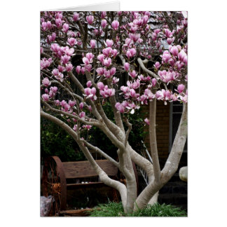 Happy Mothers Day  - Magnolia Tree Card