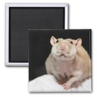 Happy Rat Magnet