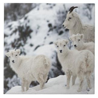 Happy Sheep Family Ceramic Tile