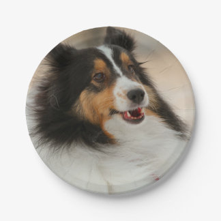 Happy shelty paper plate