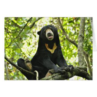 Happy Sun Bear Card
