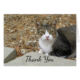 Happy Tabby Thank You Note Card