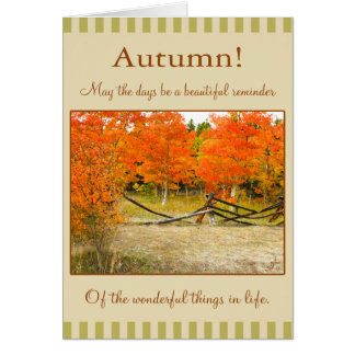 Happy Thanksgiving! Colorful Autumn Aspens Card