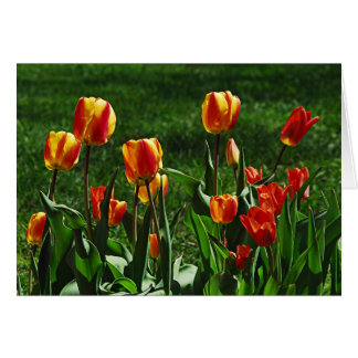 Happy Tulips Card