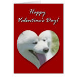 Happy Valentine's Day American Eskimo Dog Card