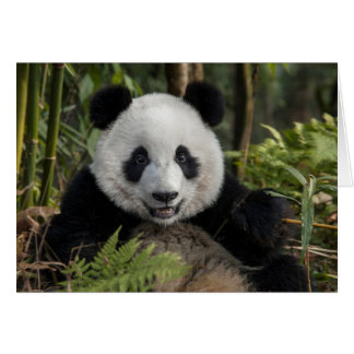 Happy young panda, China Card