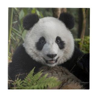 Happy young panda, China Ceramic Tile