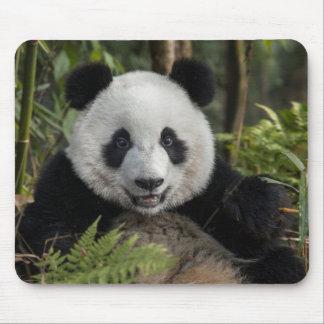 Happy young panda, China Mouse Pad