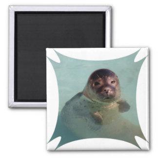 Harbor Seal Square Magnet