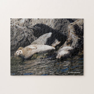 Harbor Seals Basking in the Summer Sun Jigsaw Puzzle