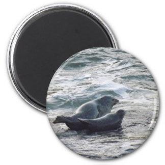 Harbor Seals 6 Cm Round Magnet