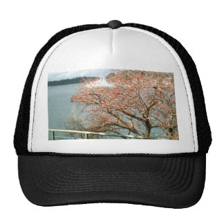 Harbor Tree Cap