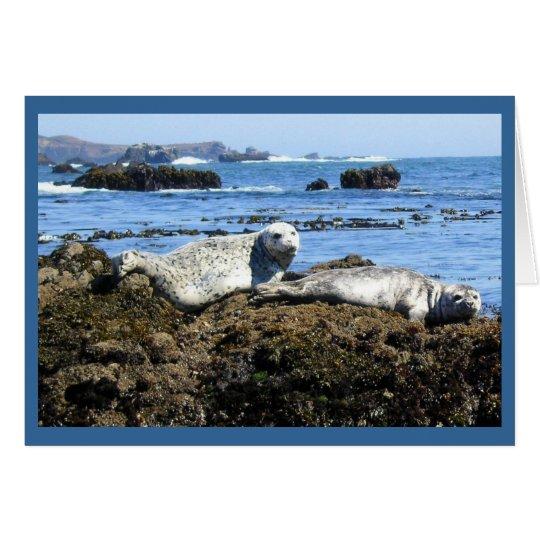 Harbour Seals Card