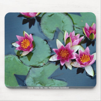 Hardy water lily, red, Nymphaea laydekeri Mouse Pad