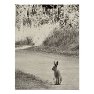 Hare today poster