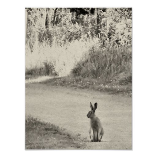 Hare today posters