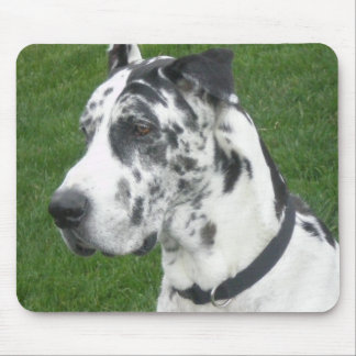 Harlequin Dane Mouse Pad