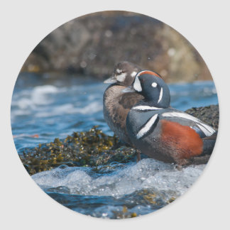 Harlequin Duck in ocean surf Classic Round Sticker