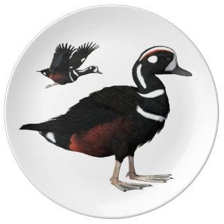 Harlequin Duck Plate