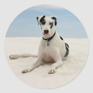 Harlequin Great Dane Puppy Dog Sticker / Seal