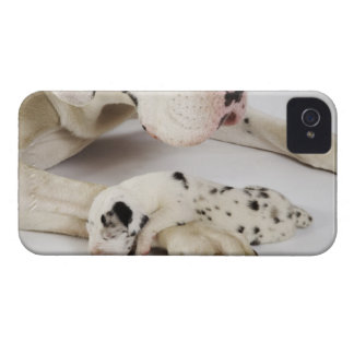 Harlequin Great Dane puppy sleeping on mother iPhone 4 Cases