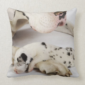 Harlequin Great Dane puppy sleeping on mother Pillows