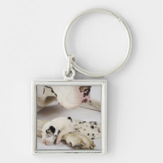 Harlequin Great Dane puppy sleeping on mother Key Chains