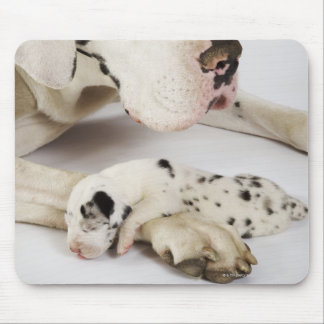 Harlequin Great Dane puppy sleeping on mother Mousepad