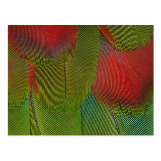 Harlequin Macaw Feather Abstract Postcard