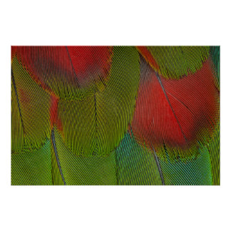 Harlequin Macaw Feather Abstract Poster