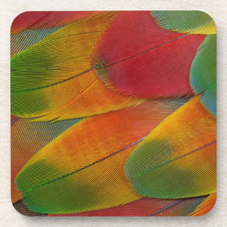 Harlequin Macaw parrot feathers Coaster