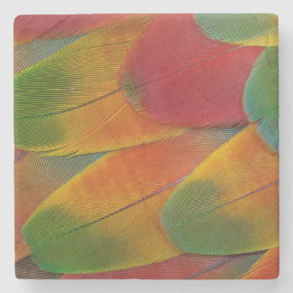 Harlequin Macaw parrot feathers Stone Coaster