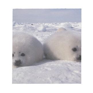 Harp seal (Phoca groenlandica) Harp seal pups Notepad