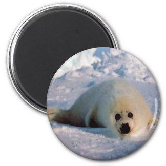 Harp Seal Pup 6 Cm Round Magnet