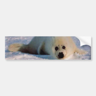 Harp Seal Pup Bumper Sticker