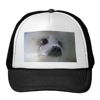 Harp seal pup trucker hat