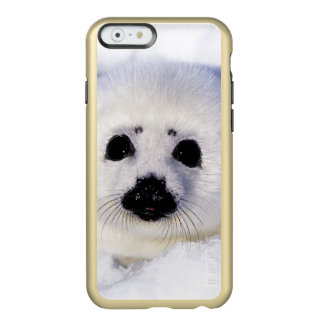 Harp seal pup ice Gulf of St. Lawrence, Incipio Feather® Shine iPhone 6 Case