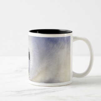 Harp seal pup ice Gulf of St. Lawrence, Two-Tone Mug